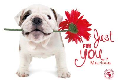 Puppy Birthday Card - Personalised Birthday Card