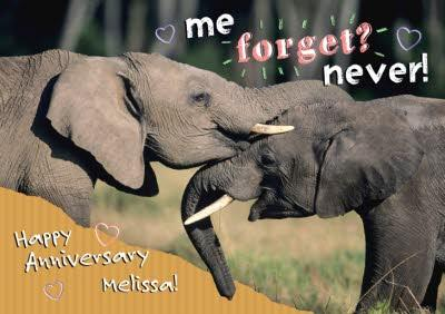 Nozzling Elephants Happy Anniversary Card
