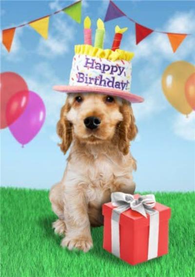 Happy Birthday Cute Dog Gift Card