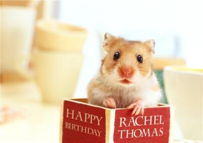 Hamster Inside A Book Personalised Birthday Card