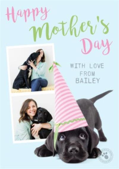 Cute Studio Pets From the Dog Photo Upload Mother's Day Card