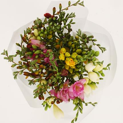 Flowers - 45 Mixed Freesias - 50% Extra Stems - Image 2