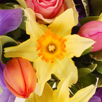 Flowers - Rainbow - Image 3