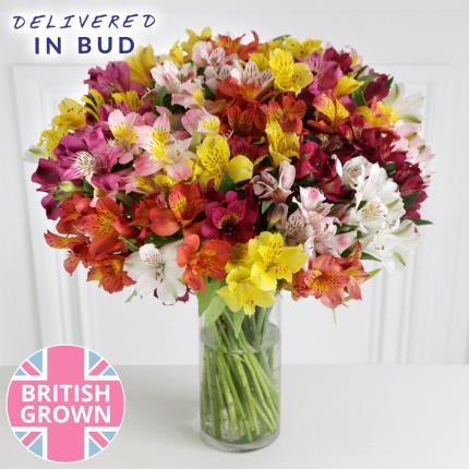 Flowers - Abundance of British Alstroemeria - Image 2