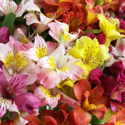Flowers - Abundance of British Alstroemeria - Image 4