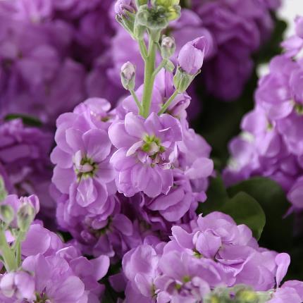 Flowers - British Stocks - Image 2