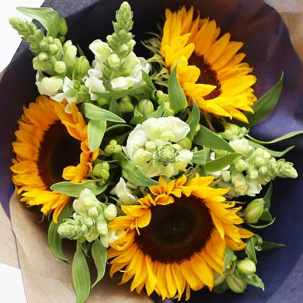 Flowers - British Sunflowers & Antirrhinum - Image 2