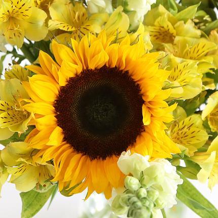 Flowers - British Sunflowers & Antirrhinum - Image 3