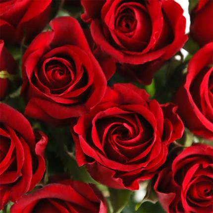 Flowers - Sweetheart Roses - Image 3