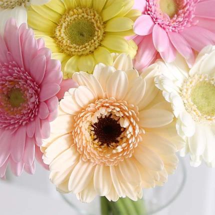 Flowers - Mixed Pastel Germini Bouquet - Image 4