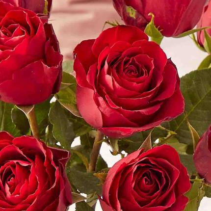 Flowers - The 12 Red Roses - Image 3