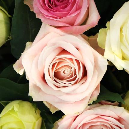 Flowers - Two Dozen Luxury Pastel Roses - Image 4