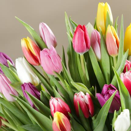 Flowers - The 30 Mixed Tulips - Image 5