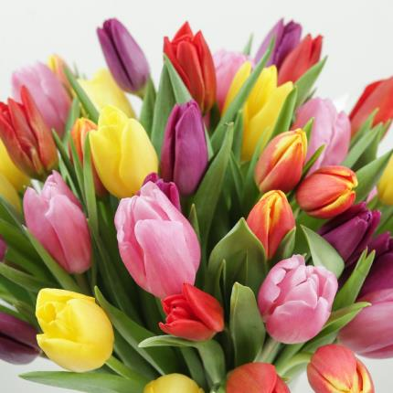 Flowers - The 50 Mixed Tulips - Image 3