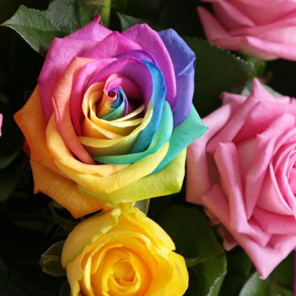 Flowers - The Grand Rainbow Roses - Image 4