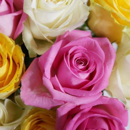 Flowers - The Fairtrade Roses - Image 3