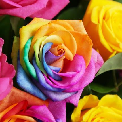 Flowers - The Rainbow Love - Image 4