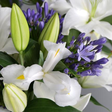 Flowers - The British Lily, Agapanthus and Iris - Image 2