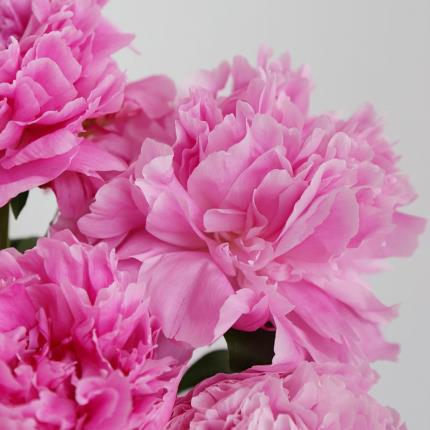 Flowers - The Letterbox Peonies & Macaron Gift Set - Image 4