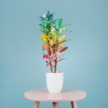 Plants - The Rainbow Orchid - Image 2