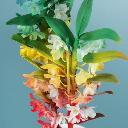 Plants - The Rainbow Orchid - Image 3