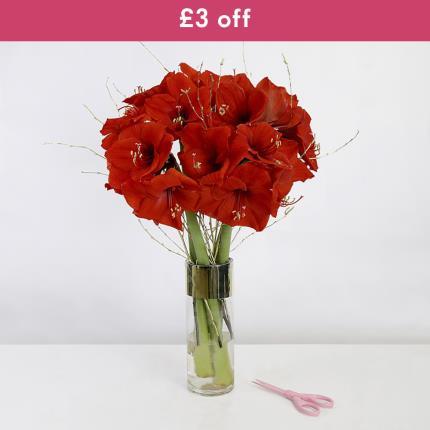 Flowers - The Amaryllis Vase - Image 2