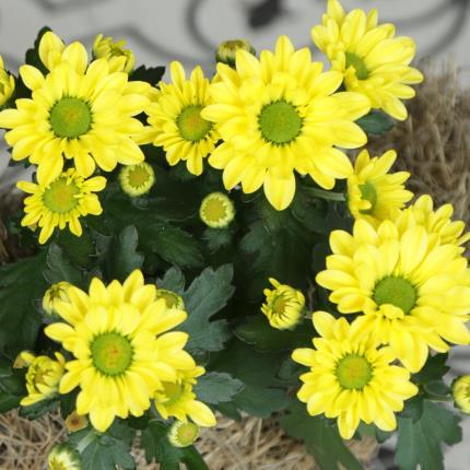 Flowers - The Greta Goose - Image 3