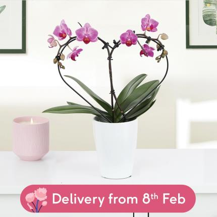 Flowers - The Orchid Heart - Image 2