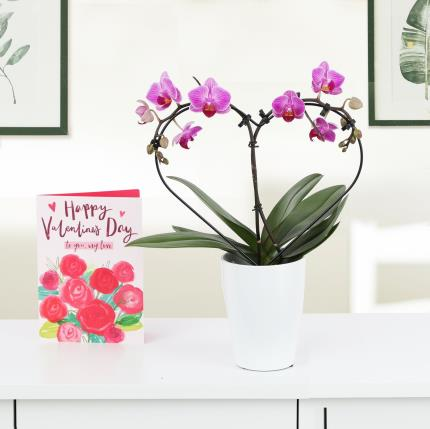 Flowers - The Orchid Heart - Image 3