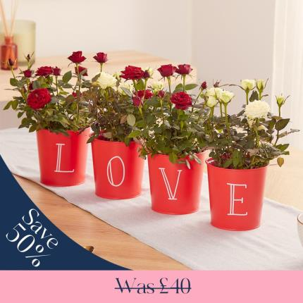 Flowers - The LOVE Rose Pots - Image 2