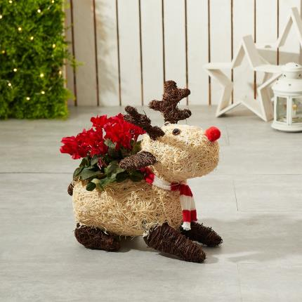 Flowers - The Christmas Reindeer - Image 2