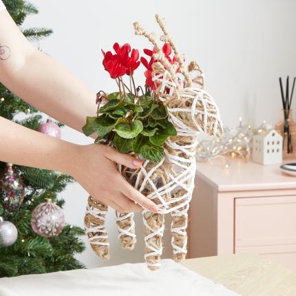 Flowers - The Christmas Reindeer - Image 3