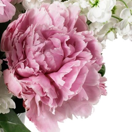 Plants -  British Peonies & Stocks Bouquet - Image 4