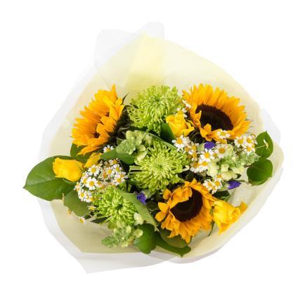 Plants - Lemon Sherbet - Image 3