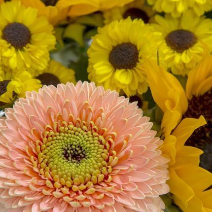 Plants - Golden Splendour - Image 4