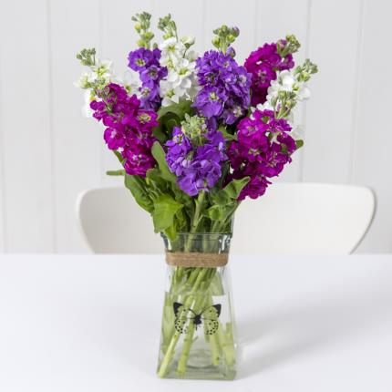 Plants - British Scented Stocks with Butterfly Vase - Image 2