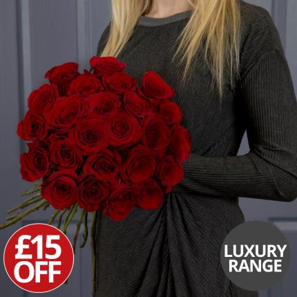 Plants - 24 Luxury Freedom Roses- Was £65, Now £50 - Image 2