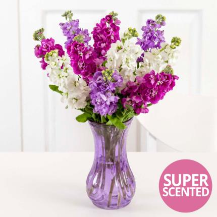 Plants - British Scented Stocks in Vase - Image 2