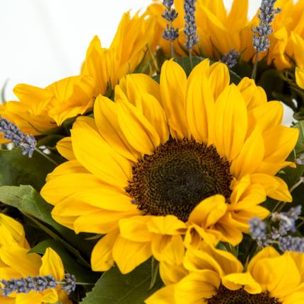 Plants - Sunflower Vintage Tin- Was £30, Now £28 - Image 3