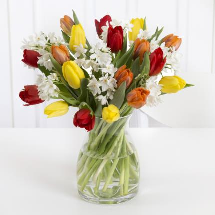 Plants - Tulip and Narcissi  - Image 2