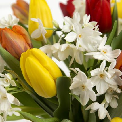 Plants - Tulip and Narcissi  - Image 3