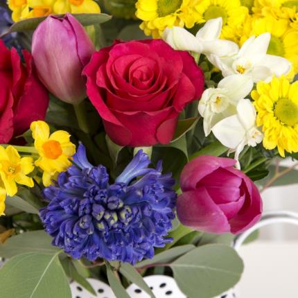 Plants - Spring Brights with Jug  - Image 3