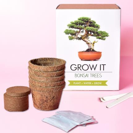 Gadgets & Novelties - Grow It Bonsai Tree Plant - Image 1