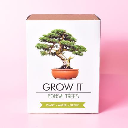 Gadgets & Novelties - Grow It Bonsai Tree Plant - Image 2