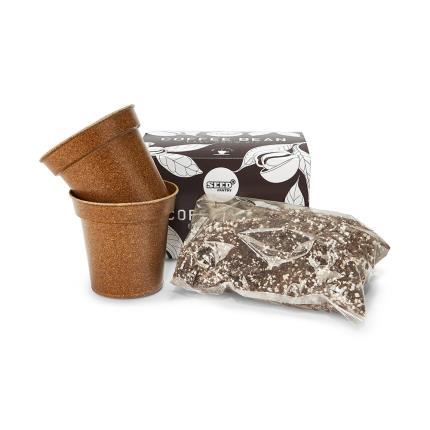 Gadgets & Novelties - Easy Grow Coffee Bean Kit - Image 2
