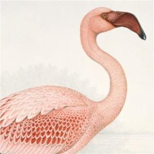 Greeting Cards - Illustrated Flamingo Card - Image 1