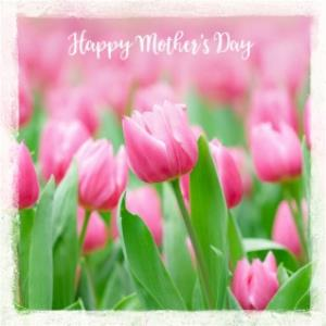 Greeting Cards - Mother's Day Card - Pink Tulips Card - Image 1