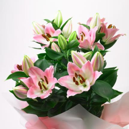 Plants - Gift Wrapped Lilies - Image 2