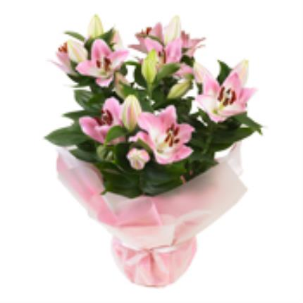 Plants - Gift Wrapped Lilies - Image 4