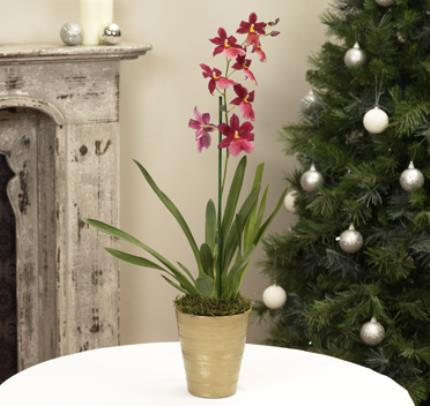Plants - Cambria Orchid - Image 2